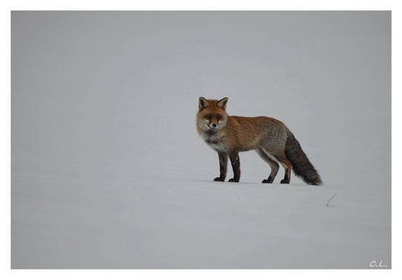 Grinsender Fuchs