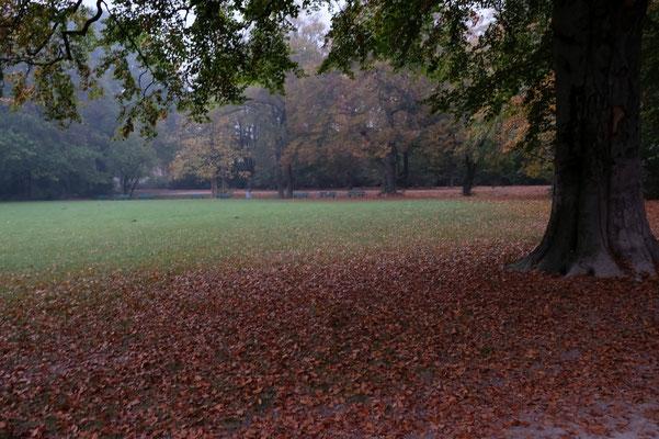 München, englischer Garten; Foto: Fred Bischoff