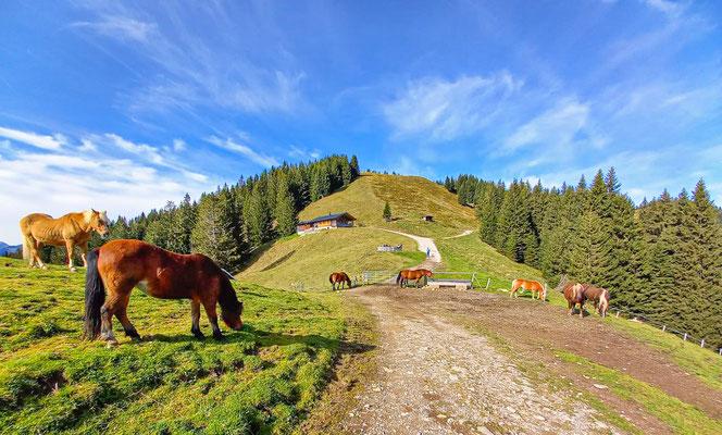 Herbst in den Ammergauer Alpen; Foto: Michael Götz