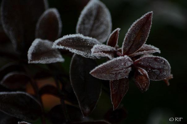 Blätter; Foto: Richie Frank