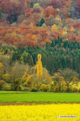Herbst im Klettgau; Foto: Michael Götz