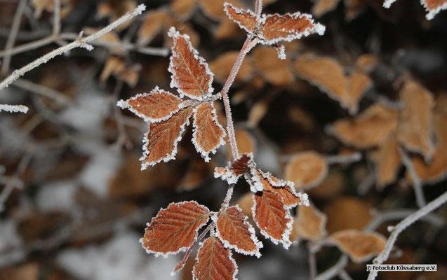 Blätter; Foto: Helmut Heidinger