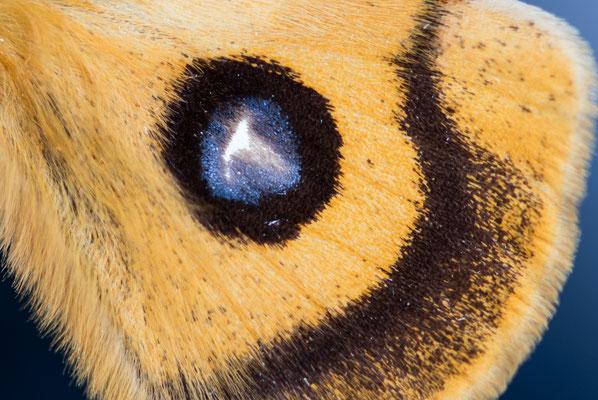 Makroaufnahmen von Schmetterlingsflügeln; Foto: Werner Beermann