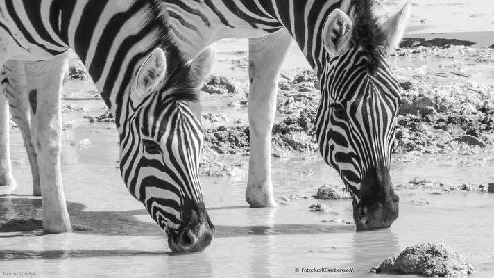 Zebras am Wasserloch; Foto: Thomas Schulter