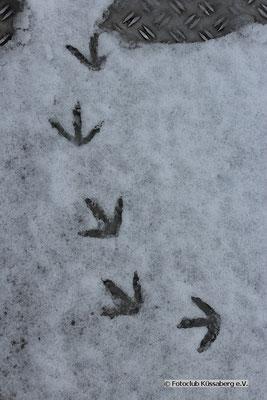 Vogelspuren; Foto: Inken Ebers