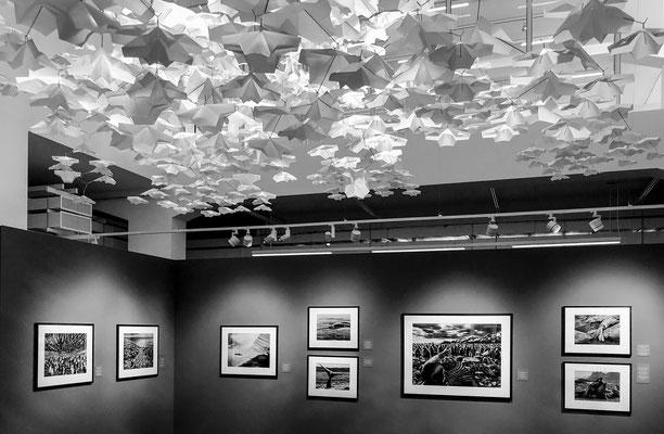 Ausstellung von S. Salgado, Zürich;   Foto: Werner Beermann