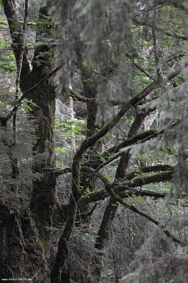 Im Bannwald Mettmatal