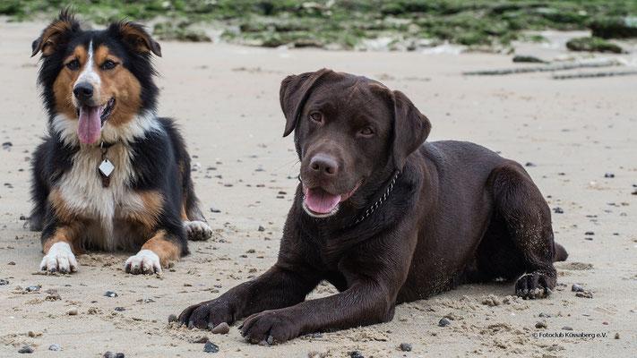 Luzie&Balou; Foto: Iris Blümling