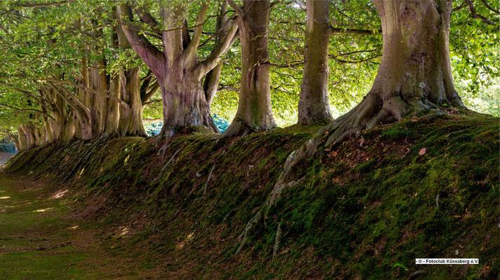 Damm mit Bäumen in der Normandie; Foto: Iris Blümling