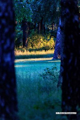 Blaue Bäume in Schweden; Foto: André Rusch