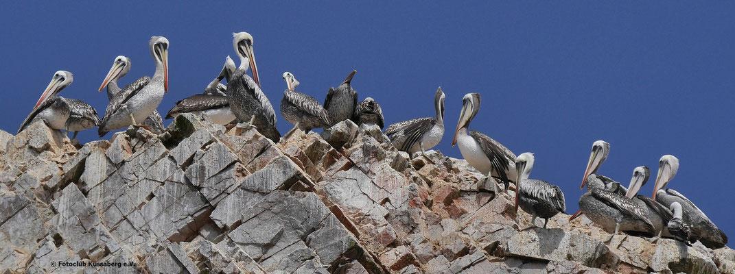 Isle Ballestas, Peru; Foto: Rudi Franck