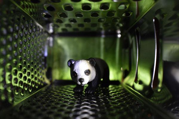 Panda im grünen Dschungel; Foto: Sabine Mathis