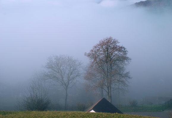 bei Hohentengen; Foto: Fred Bischoff