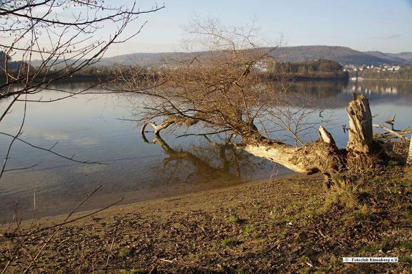 am Rhein; Foto: Sonja Grambach