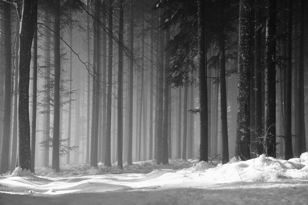 Winterwald bei Nöggenschwiel;                 Foto: Joachim Hartbaum