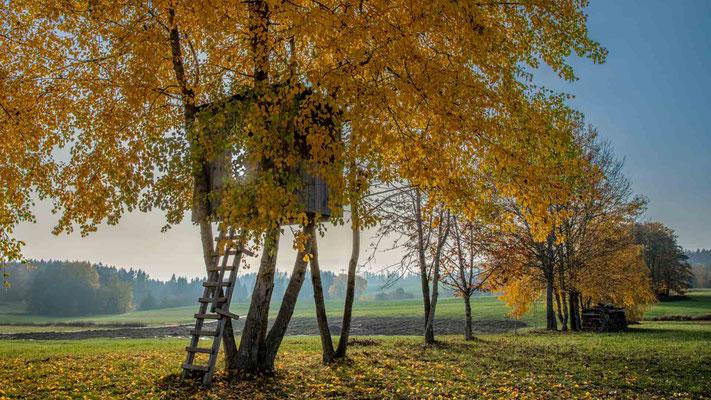Herbst im Schwarzwald; Foto: Iris Blümling