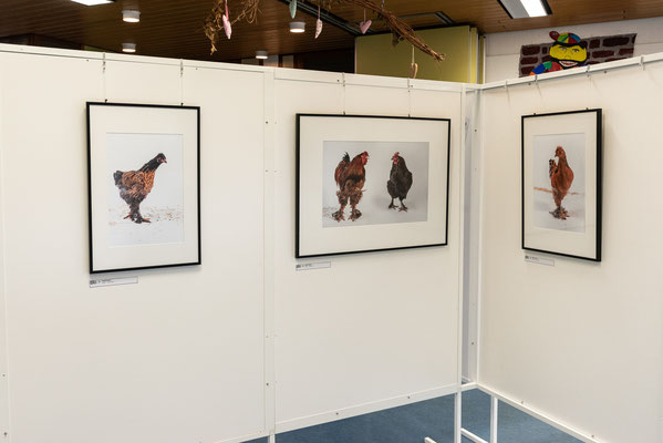 Chicken run - Michael Paiano