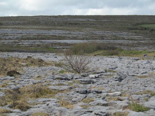 Die Burren, Irland