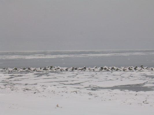 オホーツクの流氷 青空市場