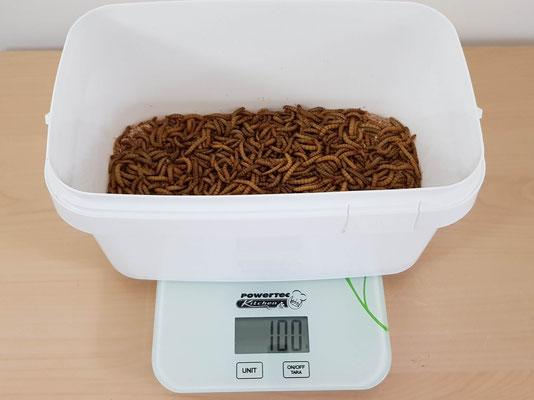 Zuchteimer Mehlwürmer