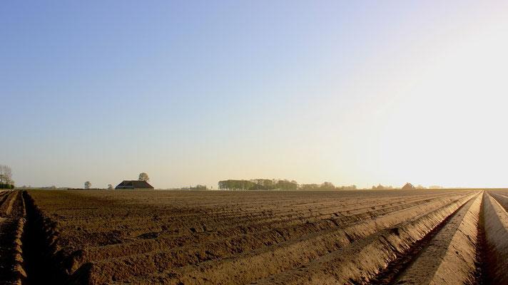 Groninger boerenlandschap - Lauwerzijl - Teenstraweg boerenlandschap met z'n charme - Mooie rechte ruggen gefreesd!
