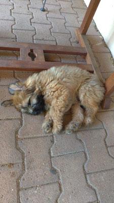Sirius est également bien arriver dans sa nouvelle maison / Sirius ist ebenfalls gut im neuen Zuhause angekommen