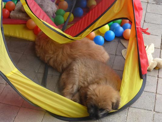 Endormi en jouant / Beim Spielen eingeschlafen