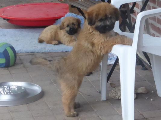 Sirius et Saïka