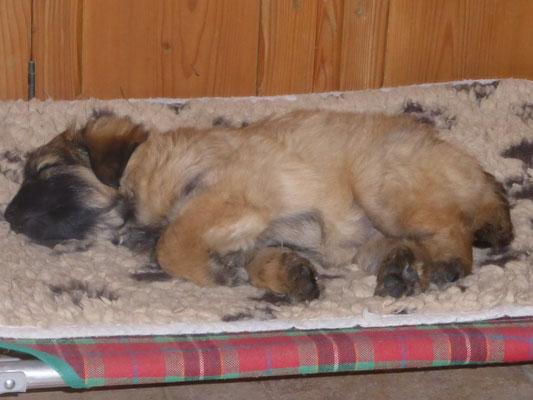 Sibelle, j'adore ce petit lit / oh so ein Liegestuhl ist doch wunderbar :-)