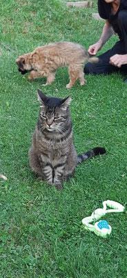 Le chat: je l'ignoire la petite Sibelle / Katze: ich ignoriere Sibelle einfach mal