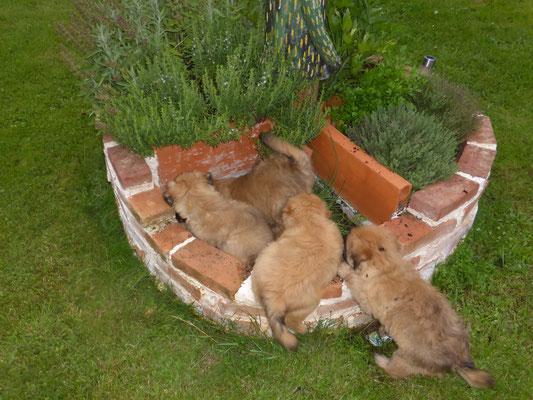 Sauvez vos plants !!!  / Rettet Eure Pflanzen !!!