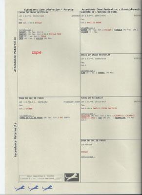 pedigree page 2