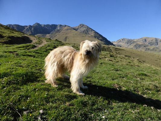 Lou au pied du Pic d'Arbizon / Lou am Fusse des Pic d'Arbizon