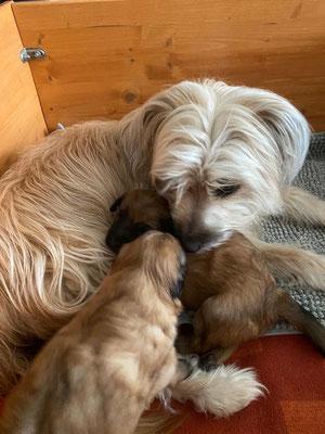 Les petits enfants de Lou à 3 semaines  /  Lou's Enkel 3 Wochen alt :-)