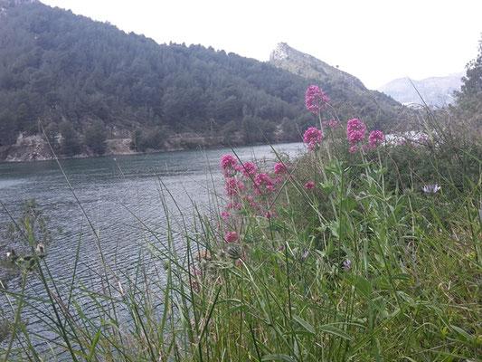 Frühling in Spanien.
