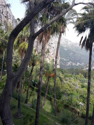 Vegetatiom im Inland der Costa Blanca / Spanien.