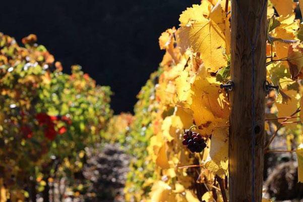Goldener Herbst im Bergischen Land/ Deutschland.