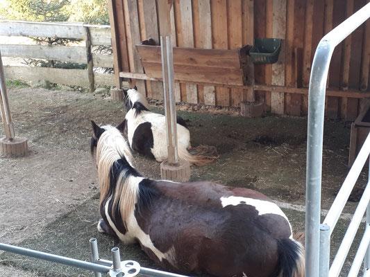 Pferde Kunstrasen Unterbau