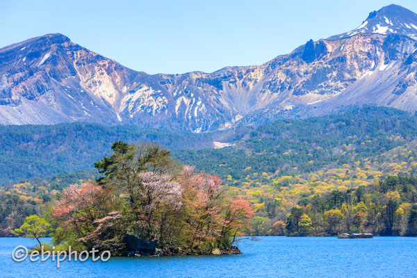 裏磐梯の桜島