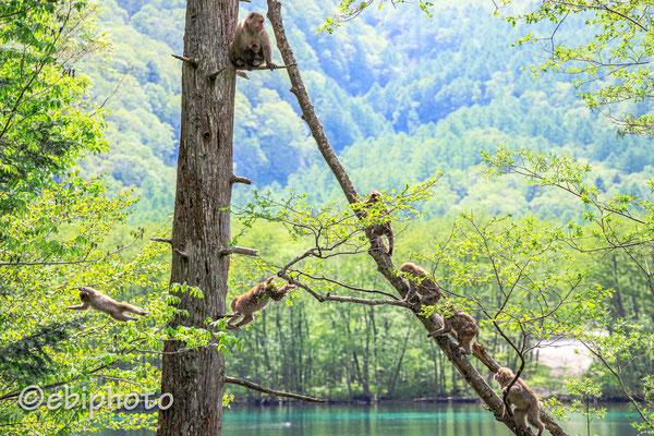 第12回(令和元年度)野生動物写真コンテスト ~自然界に生きる野生動物たち~ 入選