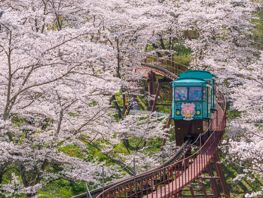 「【ホームメイト・リサーチ】春の桜写真・動画コンテスト」 佳作
