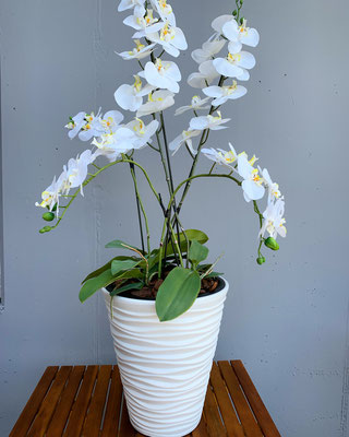 weisse orchideen in weisser exlusivem topf
