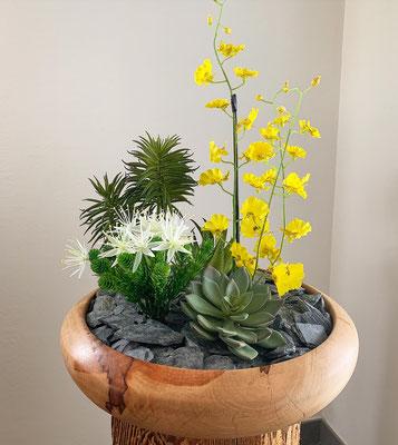 gelbe Dancing-Orchideen mit Sukkulenten