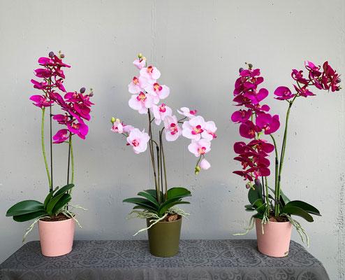 Orchideen in kleiner Topfgarnitur