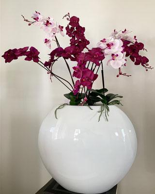 orchideen arrangement xxl in fiberglas topf