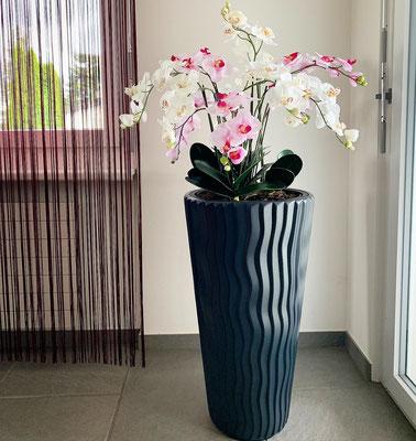 Orchideen weiss rosa mit schwarzem topf