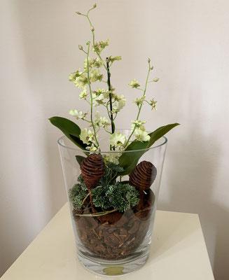 dancing orchideen in glasvase