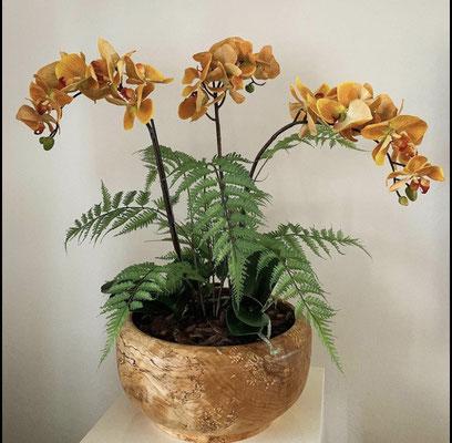 Orange Orchideen mit Farn in Holzschale