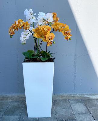 orange/weisse orchideen in hohem topf