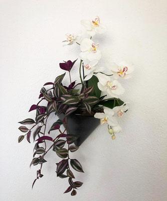 wand deko orchideen mit hängenden pflanzen